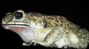 copy-cropped-frog1.jpg